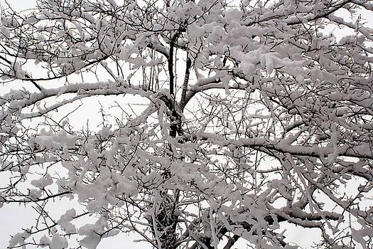 Tree by Amanda Kiplinger