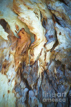 Tree Bark Collection # 61 by Philip Johnson