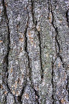 LeeAnn McLaneGoetz McLaneGoetzStudioLLCcom - Tree Bark