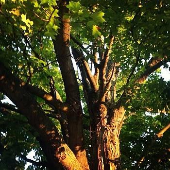Tree by Bridgett Dockray