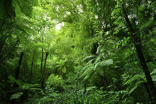Tree ferns in jungle 1 by Les Cunliffe