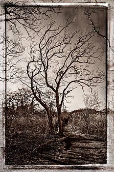 Tree by Frank Winters