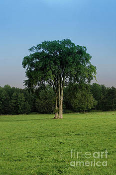 Tree in field by Kevin Shields