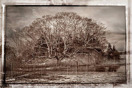 Tree in Marsh by Frank Winters