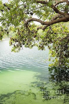 Tim Hester - Tree Leaves Above Lake