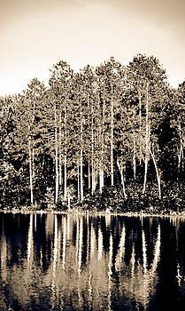 Tree Reflections 1 by Matthias Flynn