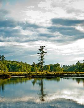 Tree Reflections 2 by Matthias Flynn