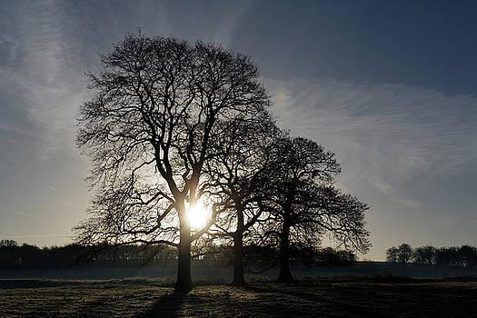 Trees by David Harding