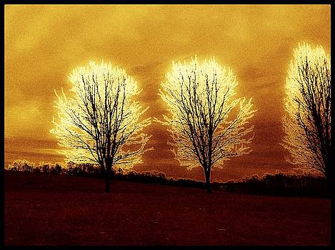 Trees in Abstract by Debra Lynch