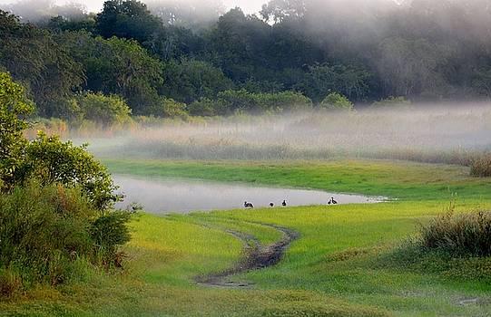 Trees in the Mist by Patricia Twardzik