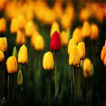 Ingrid Smith-Johnsen - Tulip 16