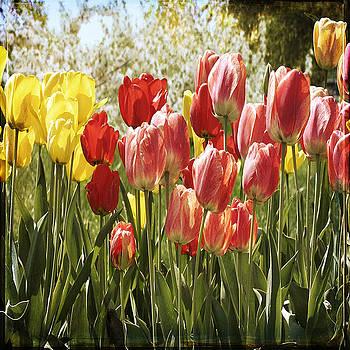 Ingrid Smith-Johnsen - Tulip 18