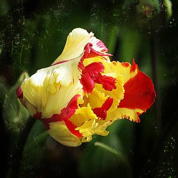 Ingrid Smith-Johnsen - Tulip 28
