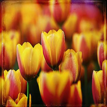 Ingrid Smith-Johnsen - Tulip 4