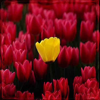 Ingrid Smith-Johnsen - Tulip 8