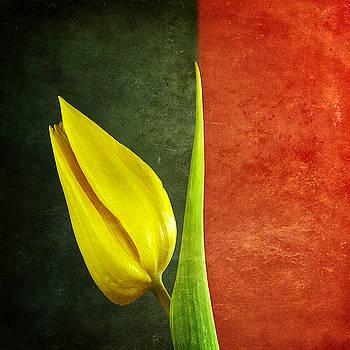 Ingrid Smith-Johnsen - Tulip 9