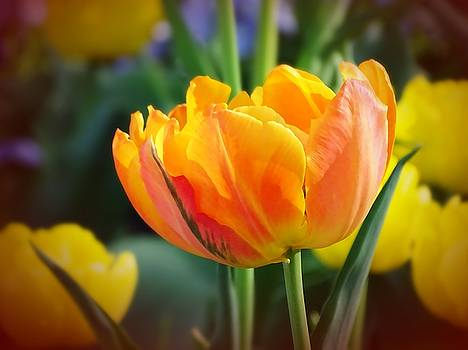 Tulip  by Ed Berlyn