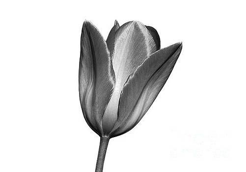 Petals of Spring by Geoff Smith