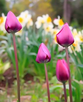 Tulips  by Michal Batko