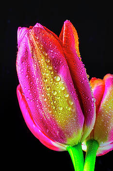 Tulips Together by Garry Gay