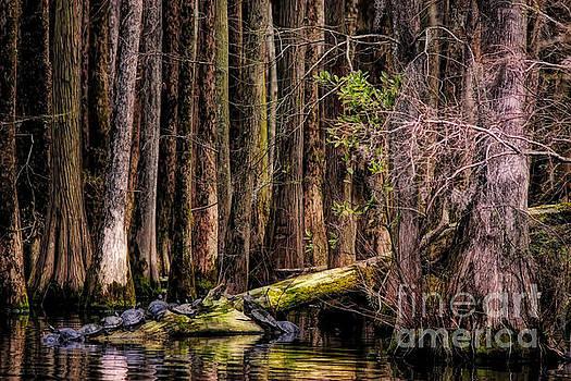 Paulette Thomas - Turtles In The Swamp