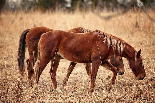 Two Horses by Scott Fracasso