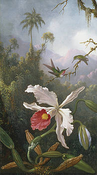 Two Hummingbirds Above a White Orchid by Martin Johnson Heade