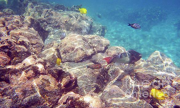 Underwater Beauty by Karen Nicholson