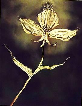 Untitled by Anna Villarreal Garbis