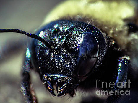 Up Close And Personal by Missy Richards