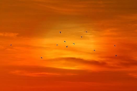 Upon A Sunset Flight by Angie Tirado