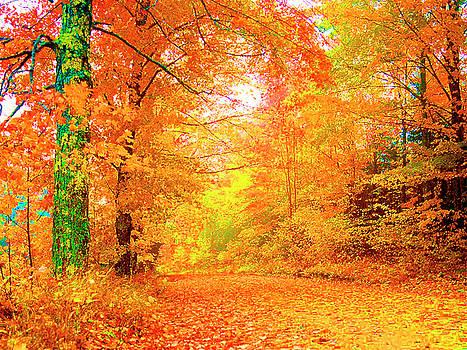 Vermont Autumn by Vicky Brago Mitchell