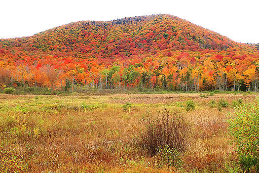 Vermont Foliage 1 by Newman Artography