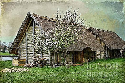 Teresa Zieba - Viking Village