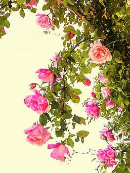 Vintage Roses by Elaine Teague