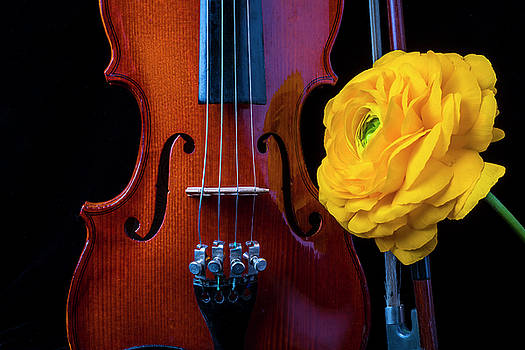 Violin And Ranunculus by Garry Gay
