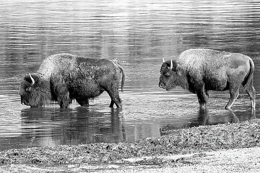 Adam Jewell - Wading Into The Yellowstone - Black And White