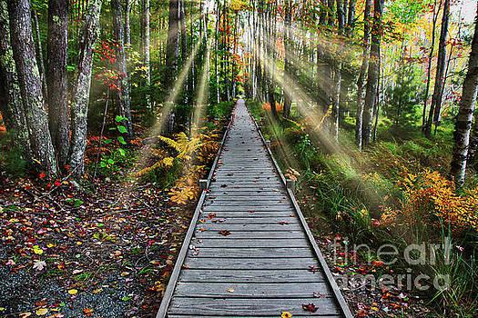 Walkway in nature with sunrays by Miro Vrlik