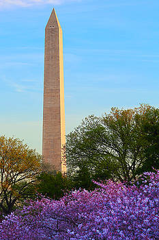Washington Monument Spring by Mitch Cat