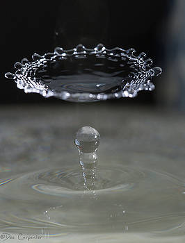 Water Drop Photography by Dee Carpenter