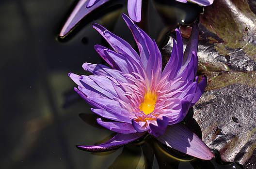 Clayton Bruster - Water Floral