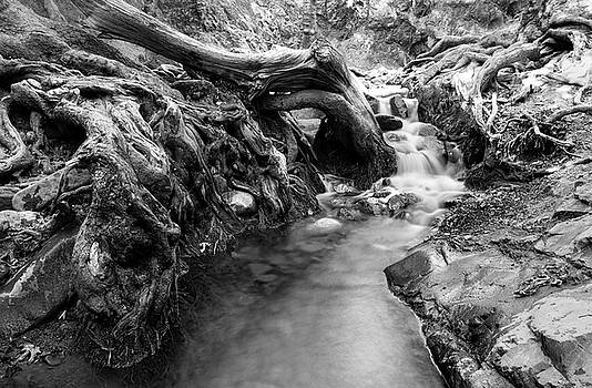 Water flowing through tree roots by Michalakis Ppalis