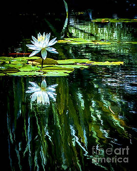 Rich Governali - Water Lilly