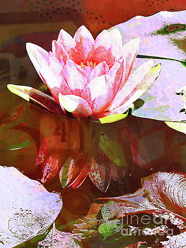 Water Lily by Robert Ball