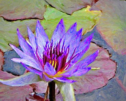 Water Lily by Winnie Chrzanowski