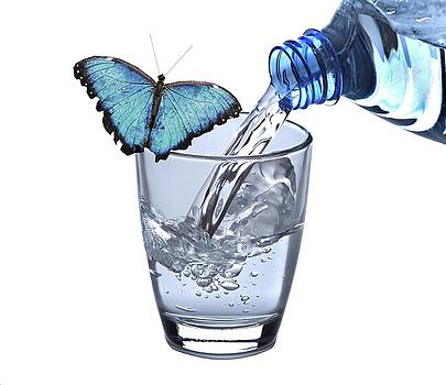 Water with Butterfly... by Manfred Lutzius