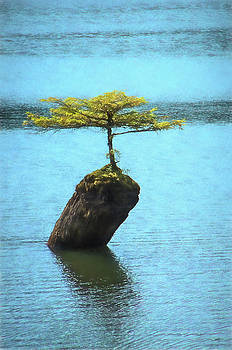 Marilyn Wilson - Fairy Lake Tree
