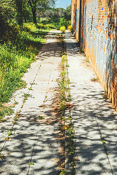 Eduardo Huelin - weed growing through crack in pavement
