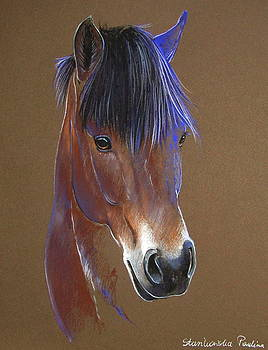 Welsh pony by Paulina Stasikowska