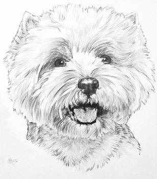 West Highland White Terrier by Barbara Keith
